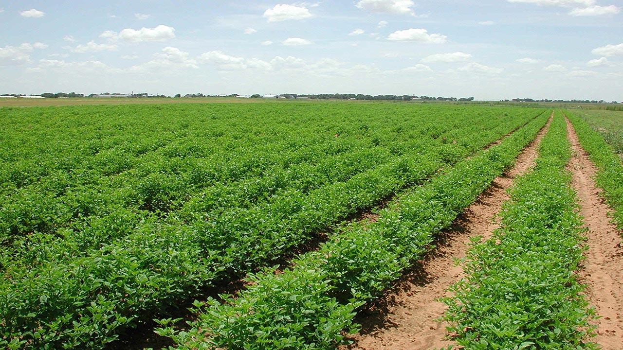 پشتیبانی از استارتآپی برای افزایش بهرهوری محصولات کشاورزی