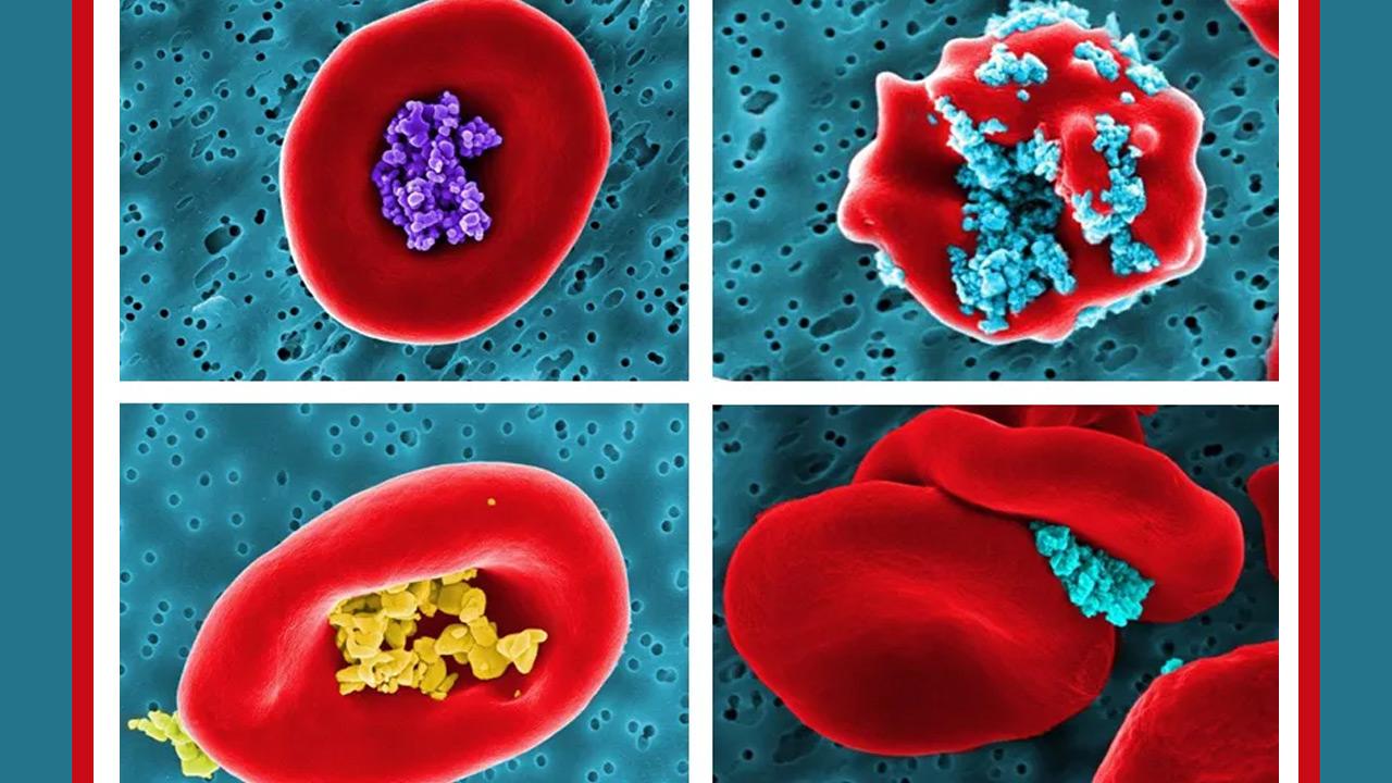 بررسی امکان استفاده از سلولهای خون برای حمل دارو