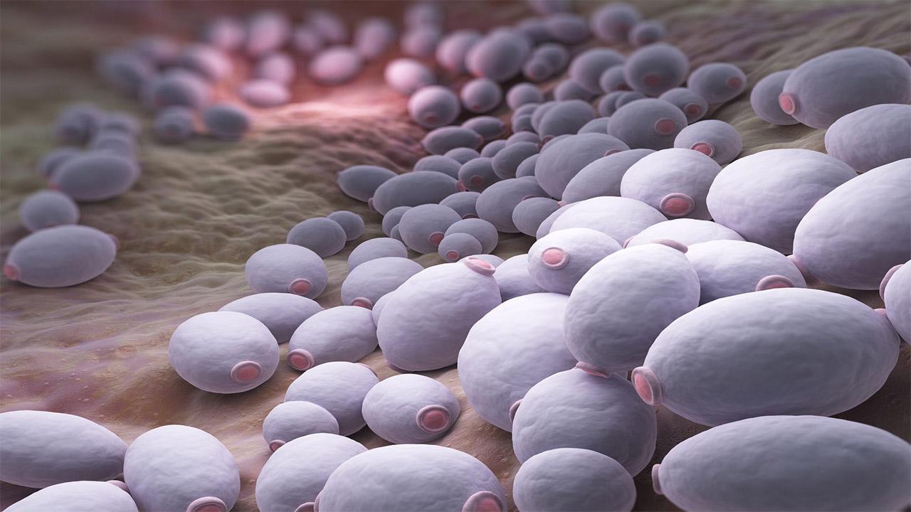 دستکاری سطح نانوذرات برای به داماندازی پاتوژن