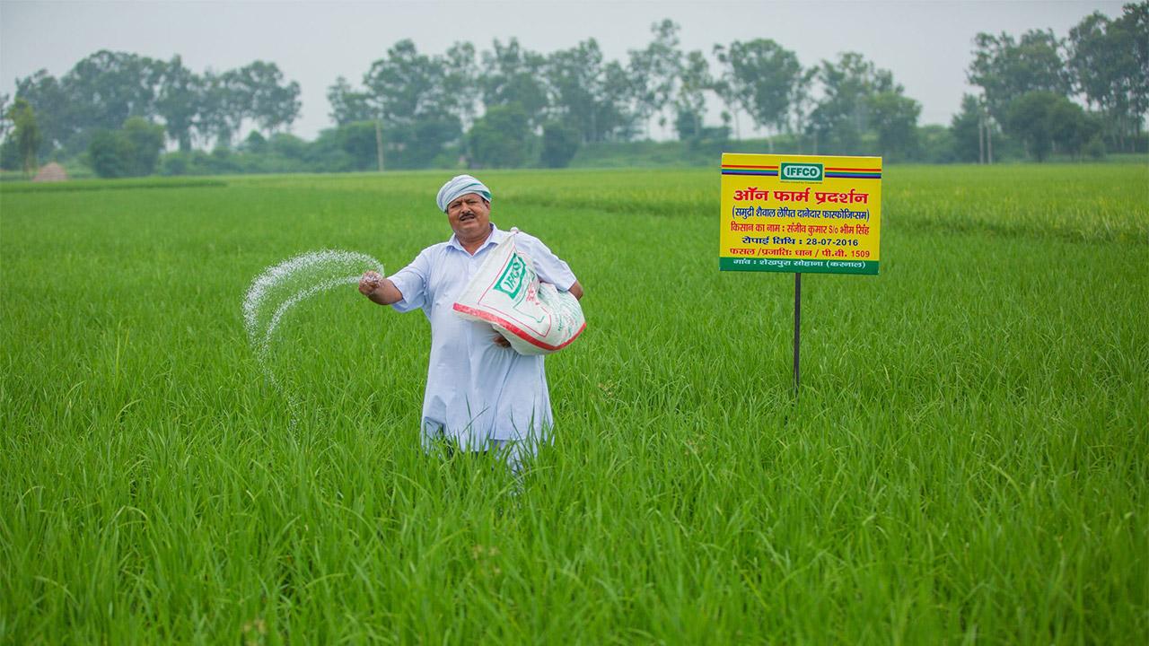 کود نانویی موجب کاهش یارانه بخش کشاورزی هند میشود
