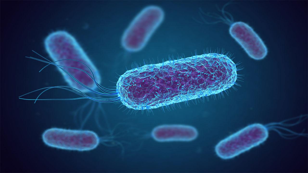دستکاری استرین باکتری برای حذف دیاکسیدکربن از هوا