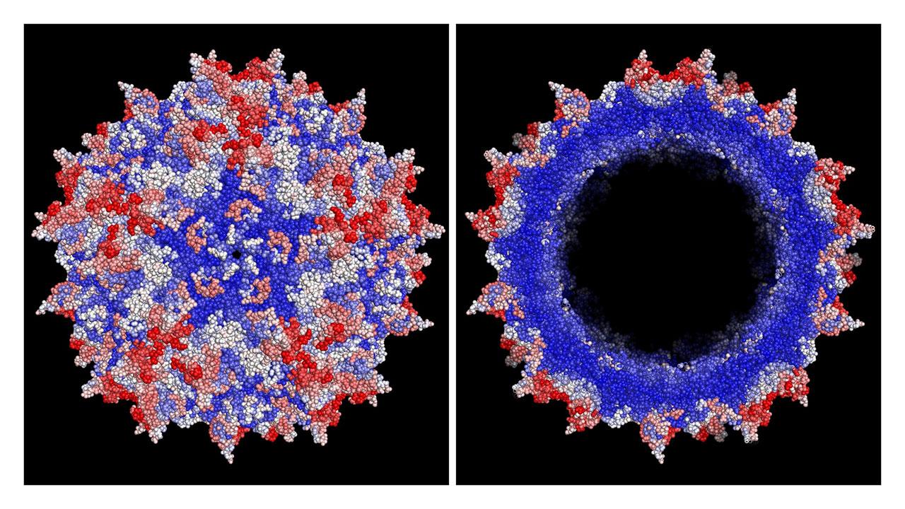 استفاده از سه فناوری برای ساخت نانوحامل ویروسی