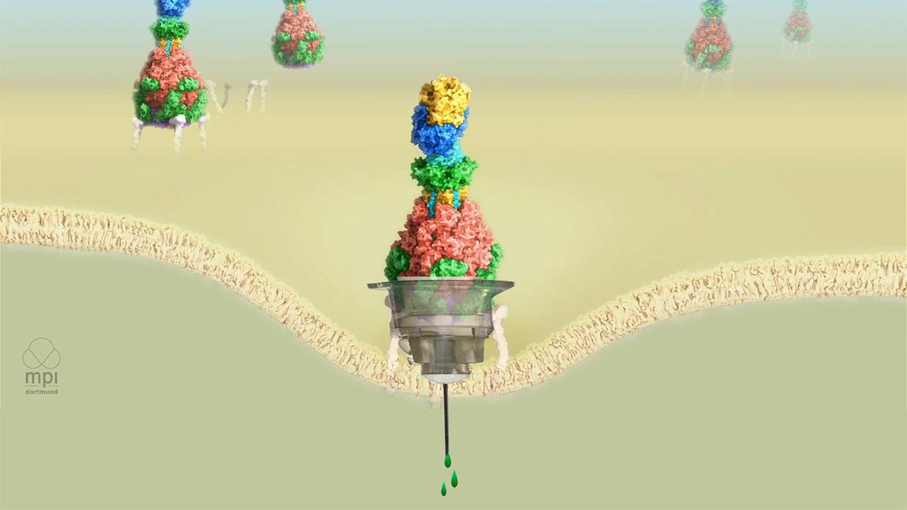 طراحی و ساخت نانوسرنگهایی برای تزریق دارو به سلول