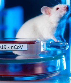 نانوواکسن ضدکرونا که روی موشها و میمونها موفقیتآمیز بوده است