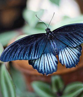الهام از بال پروانه برای تولید تراشههای کوچکتر